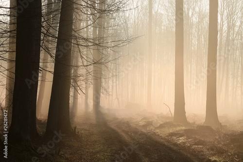 Foto auf Acrylglas Wald im Nebel Path leading through a misty forest at sunrise