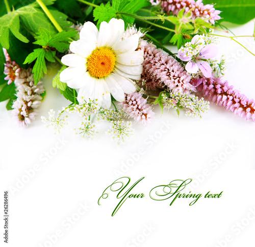 Plakat Bukiet dzicy kwiaty na bielu