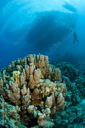 coral and boat and scuba diver