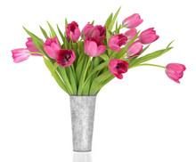 Pink Tulip Flower Beauty