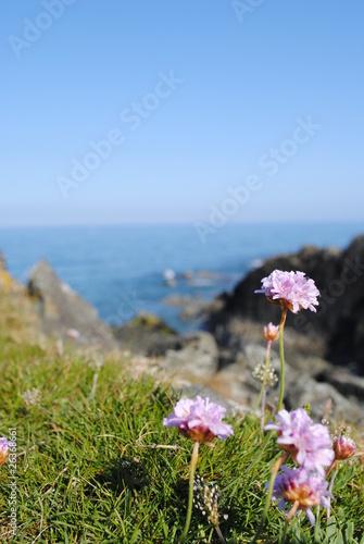 Fototapeta wild flowers