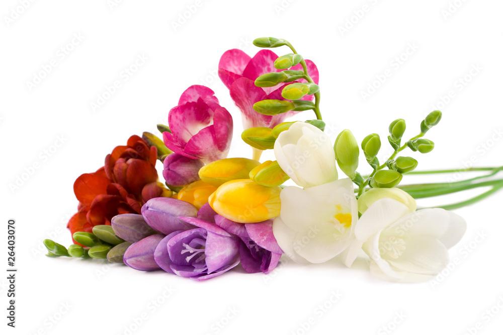 4280c868255 Poster, Foto Blooming Freesia. - Koop op EuroPosters.nl