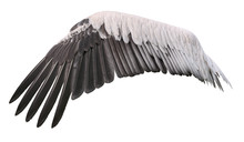 Bird Wing Cutout