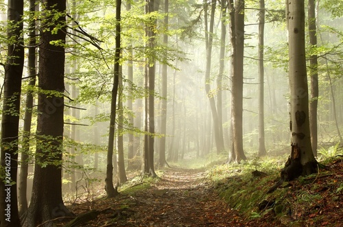 Papiers peints Foret brouillard Path in the autumn woods in the sunshine after a rainfall