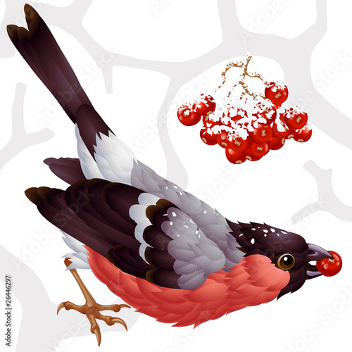 Vector bullfinch and ashberry Wallpaper Mural