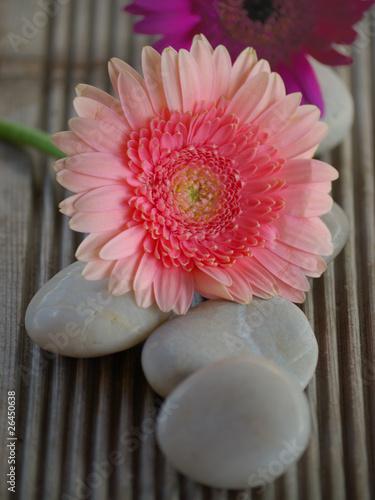 Fleur De Gerbera Rose Et Galets Buy This Stock Photo And Explore