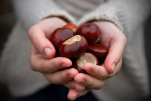Handful Of Conkers