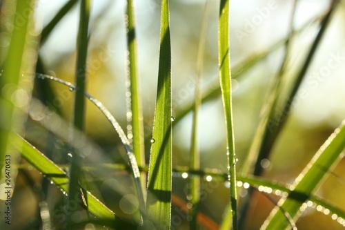 Morning Prairie Grass