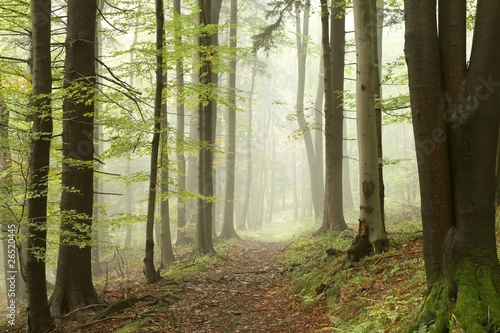 Foto auf Acrylglas Wald im Nebel Path in the autumn woods in the sunshine after a rainfall