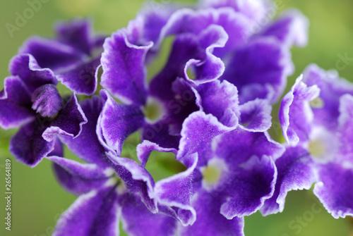 Fototapeten Natur 花