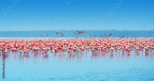 Garden Poster Flamingo African flamingos