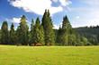 Swiss landscape whit Horses