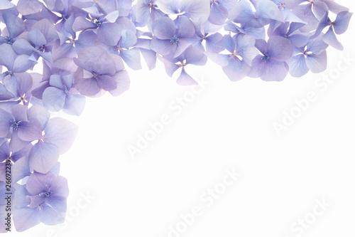 In de dag Hydrangea petal frame border