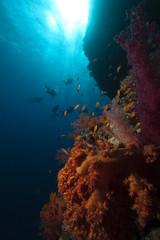 Fototapeta na wymiar fish,divers and ocean