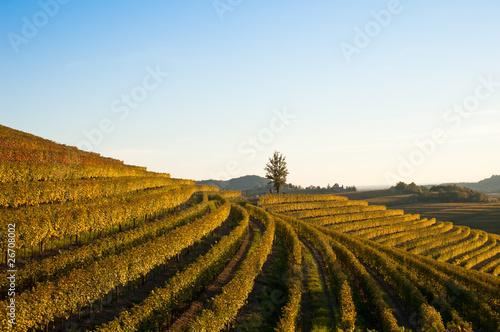 Garden Poster Vineyard Autumn vineyard landscape in Italy