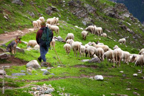 Obraz na plátně shepherd at work