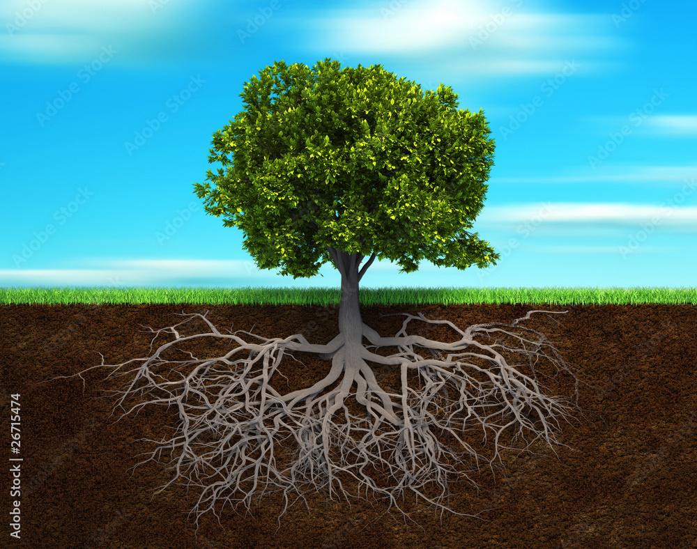Fototapeta The tree and rood