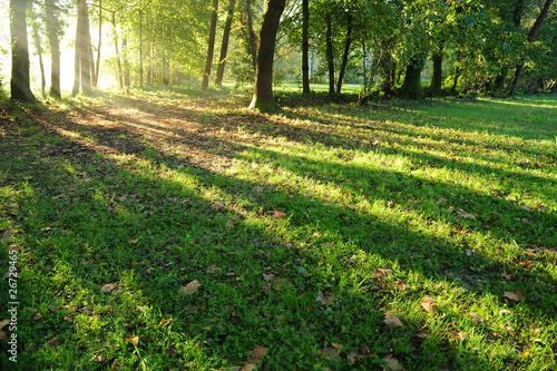 paesaggio alberi 1290 © peggy