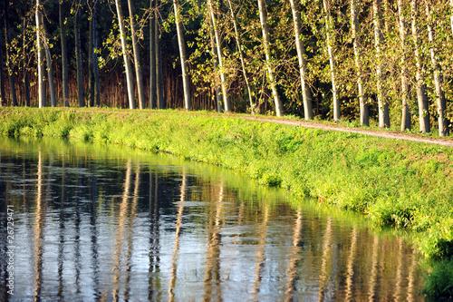 fiume tergola alberi 1256 © peggy