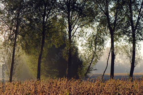 zona sile alberi 1258 © peggy