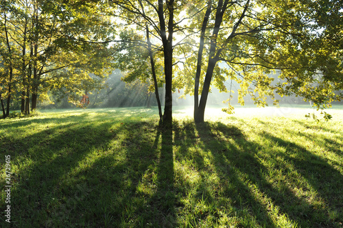 zona sile paesaggio alberi 1268 © peggy