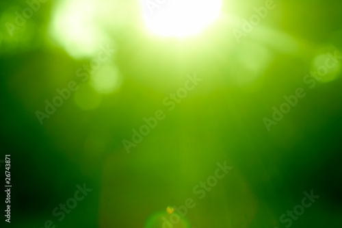 Poster Printemps Abstract green forest defocused with sunbeam