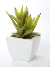 Cactus In White Sqare Pot