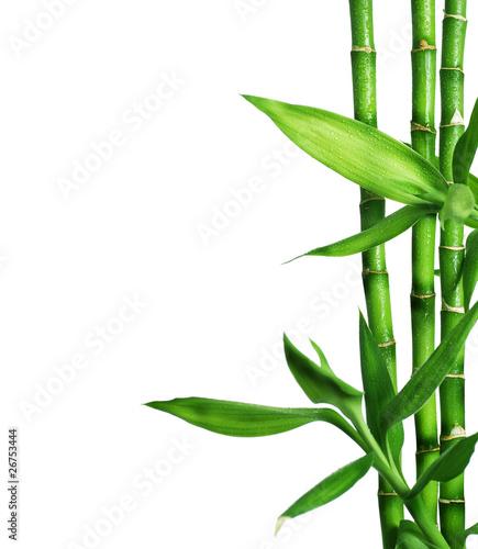 granica-bambusa