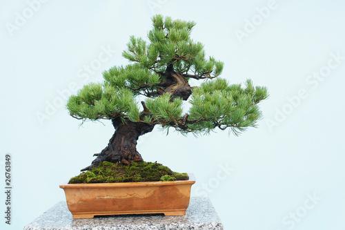 Recess Fitting Bonsai bonsai