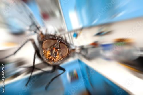 Fototapeta  housefly  Flying in kitchen