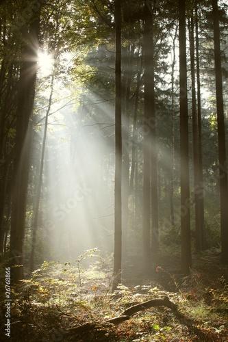 Papiers peints Foret brouillard Misty coniferous forest backlit by the rising sun