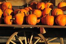Pumpkins Display