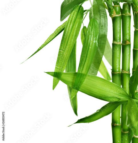 Naklejka premium Bambus odizolowywający na bielu