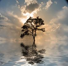 High Resolution  Tree