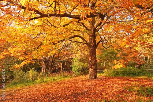Autumn in the park - 26825282
