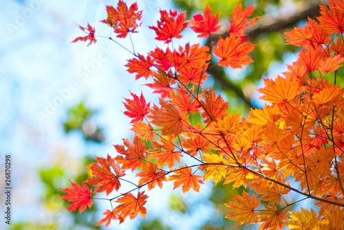 Photo листья клена в цвете осени