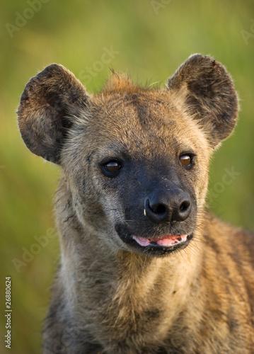 In de dag Hyena Spotted Hyena Portrait