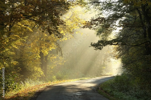 Papiers peints Foret brouillard Rural road through the misty autumn forest at sunrise