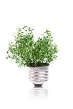Ecology Concept: Green Plant Is Growing Out Of Light Bulb