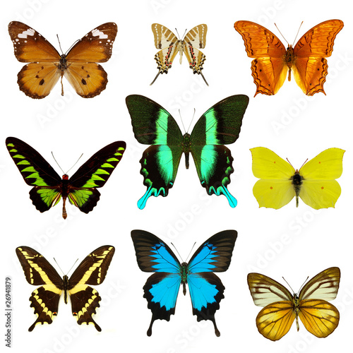 Fotografie, Obraz  exotic butterflies collection