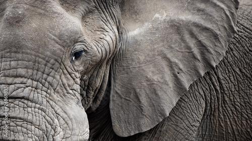 Foto op Aluminium Olifant Closeup Elephant face