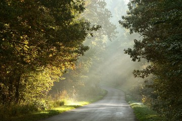 Fototapeta Rural road through the misty autumn forest at sunrise
