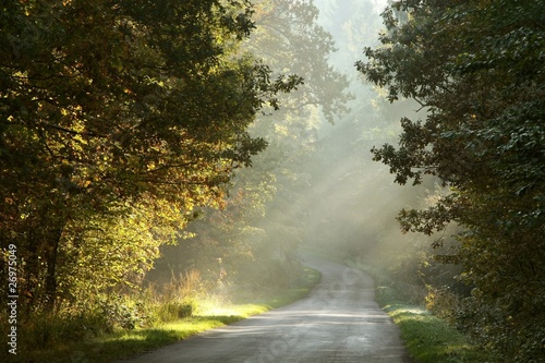 Papiers peints Foret brouillard Rural road through the misty autumn forest at sunrise