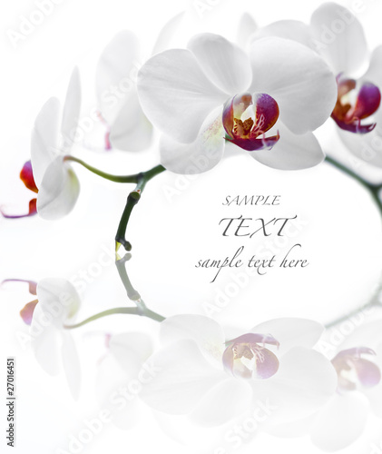 Foto op Canvas Orchidee White Orchid on white background
