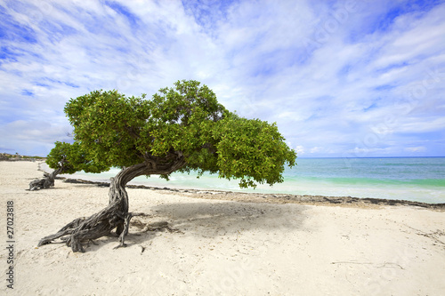 Платно Divi divi tree on Eagle beach, Aruba