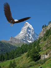 American Bald Eagle Blue Sky Montain