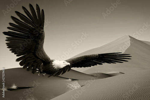 Poster Aigle american bald eagle desert flight old