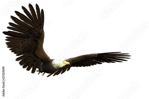 Poster Aigle american bald eagle flight