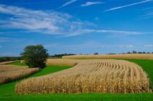 Cornfields In September