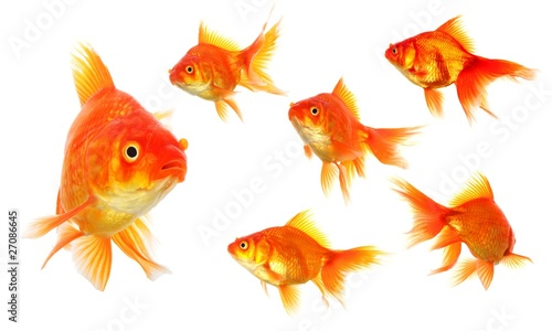 Fotografia, Obraz goldfish
